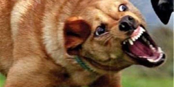 كلب ضال يعقر 36 شخصًا